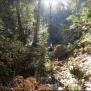 テラドローン株式会社は、九州地方の崖崩れ発生地においてドローンを用いた測量を実施。二次災害防止を目的とし、高精度の等高線及び断面図の作成を行いました。